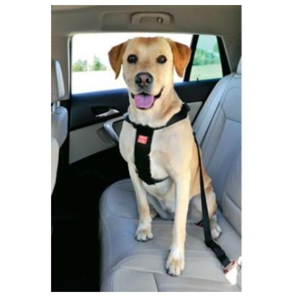 ZOLUX Bezpečnostní postroj do auta pro psa L
